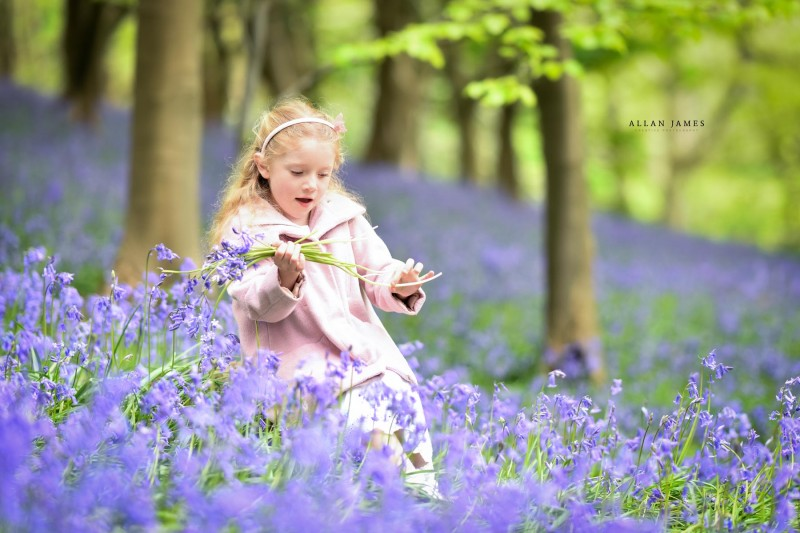 Bluebells photographer South Wales bridgend Port Talbot Swansea CArdiff
